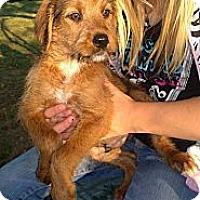 Adopt A Pet :: Luke - Ranger, TX