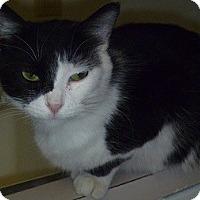 Adopt A Pet :: Nicole - Hamburg, NY