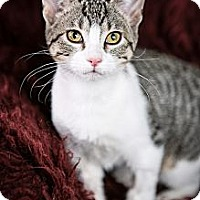 Adopt A Pet :: Mercedes - Eagan, MN