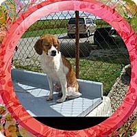 Adopt A Pet :: Zander - Carey, OH