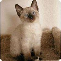 Adopt A Pet :: Taffy - Sacramento, CA