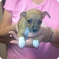 Adopt A Pet :: Peanut - Hazard, KY