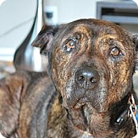 Adopt A Pet :: CLOONEY- needs a home! - Los Angeles, CA