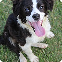 Adopt A Pet :: Finnegan - Wytheville, VA