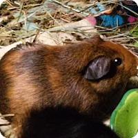 Adopt A Pet :: Redford - Fullerton, CA