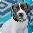 Adopt A Pet :: Shadow Litter