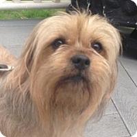 Adopt A Pet :: Duke - Nanuet, NY
