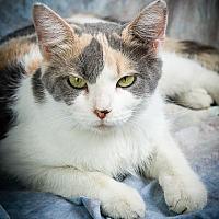 Adopt A Pet :: LEONA - Anna, IL