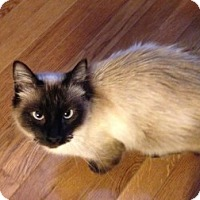 Adopt A Pet :: Dreamer - Birmingham, AL