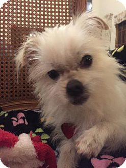 Terrier (Unknown Type, Medium) Mix Dog for adoption in Tomball, Texas - Pickles - SPECIAL NEEDS