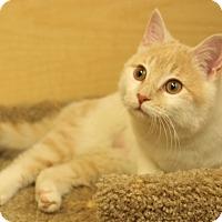 Adopt A Pet :: Beeker - Albany, NY