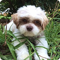 Adopt A Pet :: Max Charles - Euless, TX