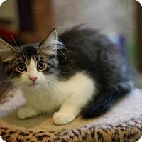 Adopt A Pet :: Hart - Dalton, GA