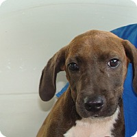 Adopt A Pet :: Kenny - Oviedo, FL