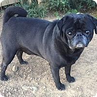 Adopt A Pet :: Benjamin - Irmo, SC
