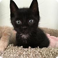 Adopt A Pet :: ROSEBUD - Lakewood, CA