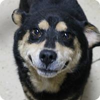 Adopt A Pet :: Bella - Mt Sterling, KY