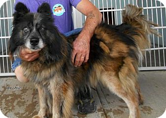 Australian Cattle Dog Mix Dog for adoption in Oskaloosa, Iowa - Archie