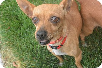 Chihuahua Mix Dog for adoption in Meridian, Idaho - Missy
