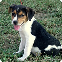 Adopt A Pet :: RUBY/ADOPTED - parissipany, NJ