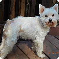 Adopt A Pet :: Sophia (10 lb) Perfect Girl! - Williamsport, MD