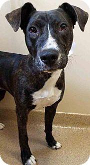 Terrier (Unknown Type, Medium) Mix Dog for adoption in Oswego, Illinois - Lola