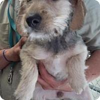 Adopt A Pet :: Daisy May - Paducah, KY