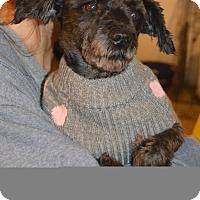 Adopt A Pet :: Simone - Prole, IA
