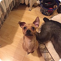 Adopt A Pet :: Ernie - West Allis, WI