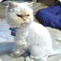 Adopt A Pet :: Emma - Marlboro, NJ