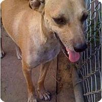Adopt A Pet :: Fred - Fowler, CA