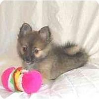 Adopt A Pet :: Brock - Mooy, AL