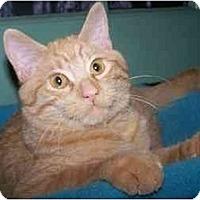 Adopt A Pet :: Sunny - Jenkintown, PA