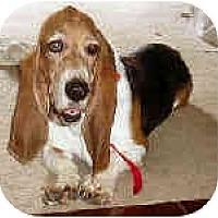Adopt A Pet :: Furley - Phoenix, AZ
