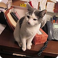 Adopt A Pet :: Angelina - Southbury, CT