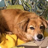 Adopt A Pet :: Winnie - Knoxville, TN