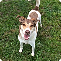Adopt A Pet :: Cheyenne in CT - East Hartford, CT