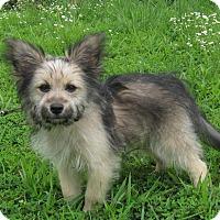 Adopt A Pet :: Sophia - Marlborough, MA