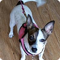 Adopt A Pet :: Leah - Oklahoma City, OK