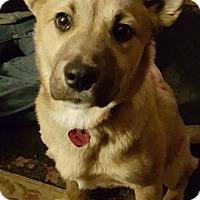 Adopt A Pet :: Cami- located in MA - Trenton, NJ