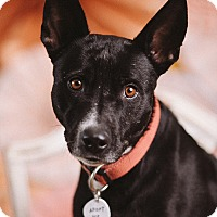 Adopt A Pet :: Belle - Portland, OR