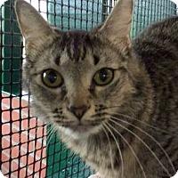 Adopt A Pet :: Heidi - Porter, TX