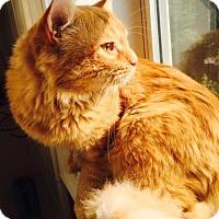 Adopt A Pet :: Moncure - Fairfax, VA