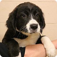 Adopt A Pet :: Wild Cherry~adopted - Glastonbury, CT