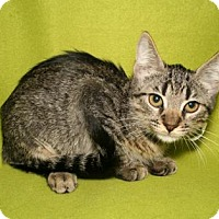 Adopt A Pet :: Damali - Bradenton, FL
