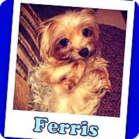 Adopt A Pet :: Ferris Franklin - Pataskala, OH