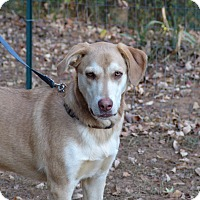 Adopt A Pet :: buddy - Hagerstown, MD