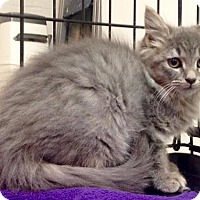 Adopt A Pet :: Cindra - River Edge, NJ