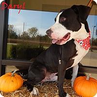 Adopt A Pet :: Daryl - Bucyrus, OH