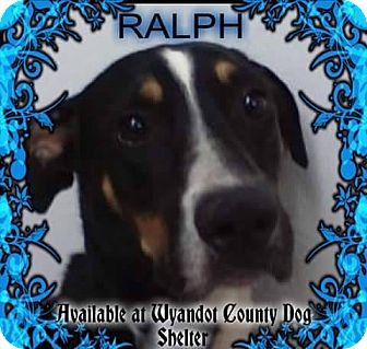 Labrador Retriever/Hound (Unknown Type) Mix Dog for adoption in Upper Sandusky, Ohio - RALPH